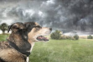 How to Prepare Pets for Disasters | Photo by Christin Lola/Bigstock