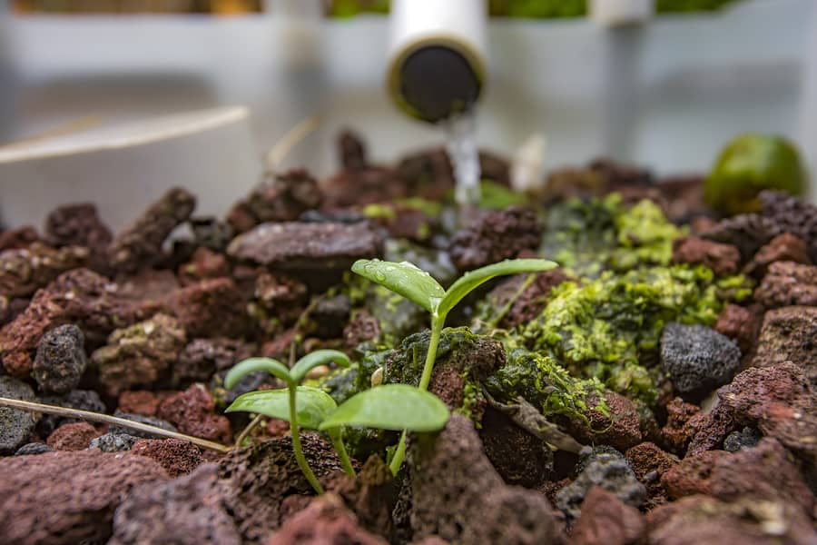 How to Start Your Own Aquaponics System to Prepare for Emergencies